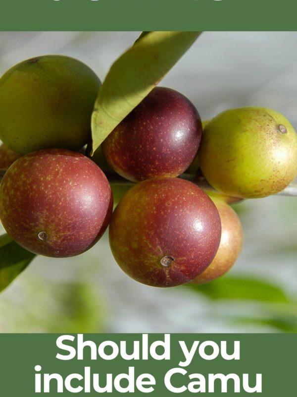 What is Camu Camu berry?