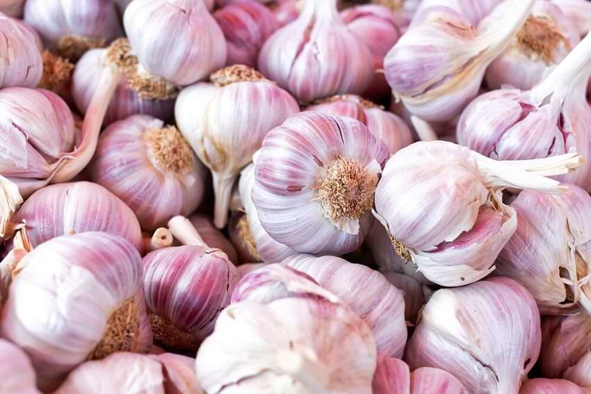 Garlic Best for Healthy Heart
